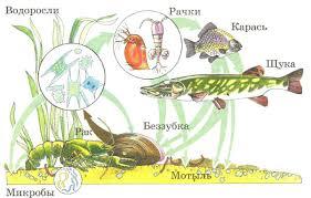 Экосистема озера Растения и животные Биология Реферат доклад  Экосистема озера Растения и животные