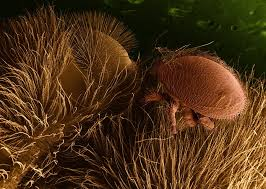 Varroa Mites Know Your Beekeeping Enemy And Be Prepared To
