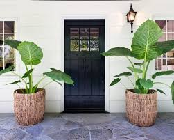 Small Picture Decorate your home with Plants Design Photos Sri Lanka Home