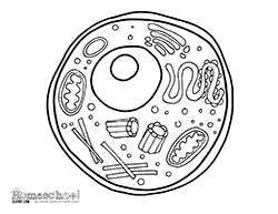 Small Picture Animal Cell Coloring Page Animal Cell Coloring Worksheet
