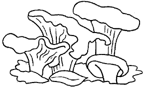 Small Picture Mushrooms Coloring Pages Coloringpages1001com