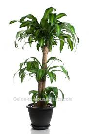 office plants for sale. Interesting Plants Bringing You The Widest Selection Of Luxury Home And Office Plants That  Can Invest In On Web UK Many Our Most Wellknown House  And Office Plants For Sale F