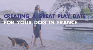 play date for your dog in france