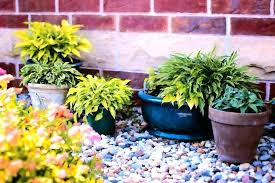 epsom salts garden salts for plants how much grow better houseplants and potted plants salt plants
