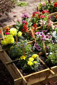 own cut flower garden