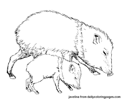 Small Picture Animal coloring pages create an mentioning coloring activity for