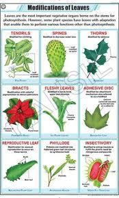 Leaf Modification For Botany Chart