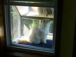 cat door for window clear window mounted cat door for sash windows catmate flap with cool dog
