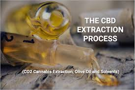 the plete guide to cbd extractions co2 cans extraction olive oil and solvents