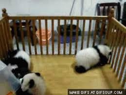 baby panda gif. Wonderful Panda Baby Panda GIF With Gif
