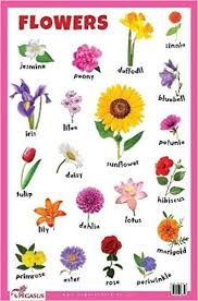 Flower Chart In English Flowers Educational Chart 9788131938874 Amazon Com Books
