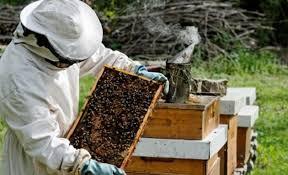 Αποτέλεσμα εικόνας για μελισσοκομικός Σύλλογος Νομού Χανίων ' Η ΜΕΛΙΣΣΑ