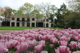 the 82nd annual river oaks garden club azalea trail will feature four river oaks homes and