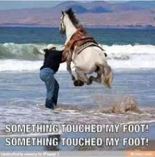 Horses on Pinterest   Horse Meme, Google Search and Meme via Relatably.com