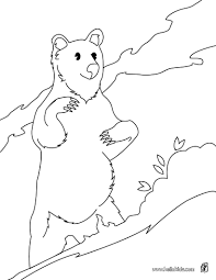 Sun Bear Coloring Page More Forest