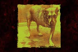 Animal Photo Albums 24 Years Ago Alice In Chains Release Self Titled Album