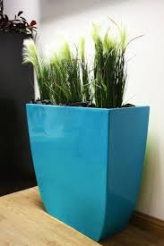 great office plants. find this pin and more on office plants by plantfinderpro great