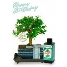 unusual birthday gift for him baby bonsai