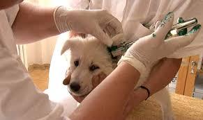 Fotogalerie Tetování Psa