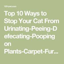 furniture 123. top 10 ways to stop your cat from urinatingpeeingdefecatingpooping on plantscarpetfurniture furniture 123 u