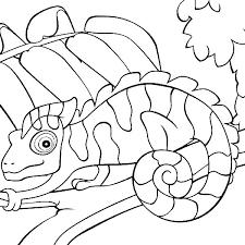 Chameleon Coloring Pages Chameleon Coloring Page Unique Chameleon