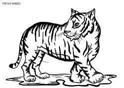 Disegni Di Tigri Da Stampare E Colorare Gratis Portale Bambini