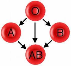 Резултат с изображение за кръвна група