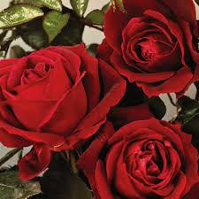Carolyn Heist Obituary - Brodheadsville, Pennsylvania | William H. Kresge  Funeral Home, Inc.