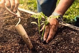 best soil for a raised bed vegetable