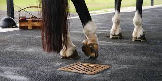 It has been an excellent addition to any aluminum trailer. Werm Seamless Equine Flooring In Florida Werm Equestrian Rubber Flooring Florida