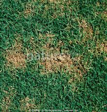 Nature Picture Library Light Circular Patches Of Dollar