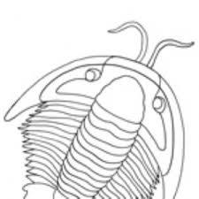 Animali Del Cambriano Da Colorare