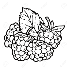 Explore Raspberries Hand Drawn And More