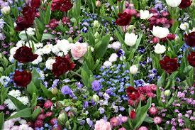 """Résultat de recherche d'images pour """"image fleurs de printemps"""""""