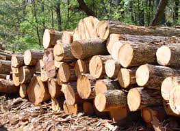 All the lumber and raw material is imported from america, new zealand, South  Africa