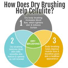 Dry Skin Brushing Chart How Does Dry Brushing Help Cellulite Really