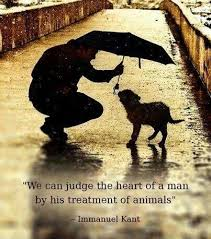 Animal Rights Quotes Impressive Animal Rights Quotes Sayings Animal Rights Picture Quotes