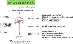 amyotrophic lateral sclerosis als