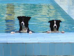 Image result for pets in the summer