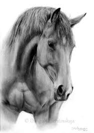 398 best equine masterpieces images pictures how to draw a realistic horse head best 25 horse head drawing ideas horse face picture drawing realistic