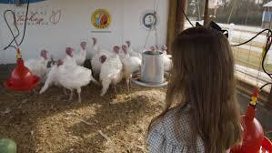 President Trump Welcomes Ntf National Thanksgiving Turkey