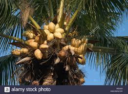 Bearing Good Fruit That Remains  Emily MasseyTree Bearing Fruit