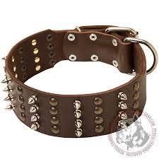 wide decorated leather american pit bull terrier collar for walking