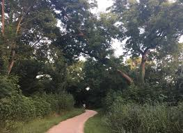 Image result for southern walnut creek trail