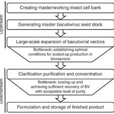 Flow Chart Of The Manufacturing Process Of Baculovirus For
