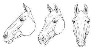 horse head drawing step by step. Inside Horse Head Drawing Step By