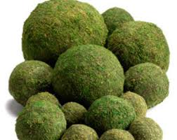 Decorative Moss Balls Moss ball Etsy 17