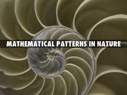 Mathematical Patterns Fascinating Mathematical Patterns In Nature By Laurenkomalley
