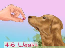 6 Ways to Treat Skin Allergies in Golden Retrievers - wikiHow