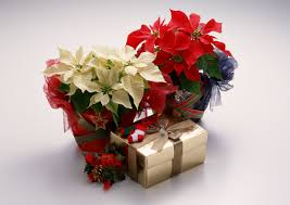 Cool Candle Flowers Merry Christmas Candles White Candle Star Poinsettias